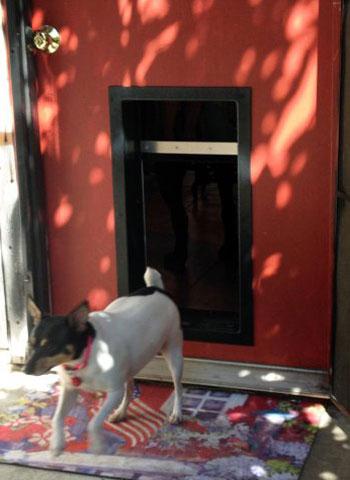 Custom Made Dog Doors