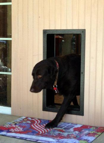 Automatic Dog Doors